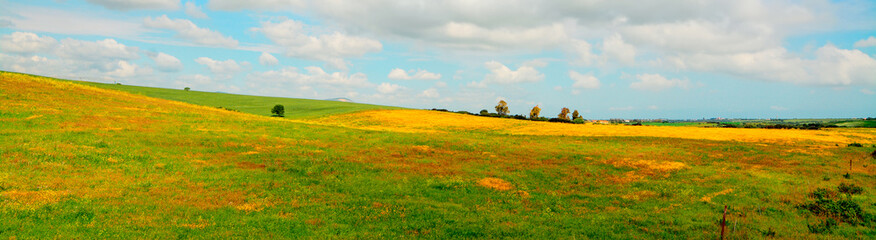 yellow and green meadow