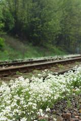 Tory kolejowe wśród kwitnących wiosennych kwiatów