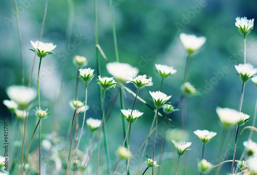 natural floral background © dubova