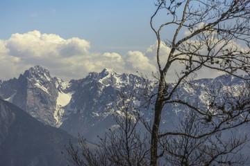Baum-Silhouette vor den Bergen