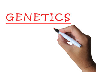 Genetics Word Shows Genetic Makeup And Anatomy