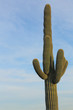 Desert Southwest Landscape