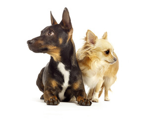 dogs looking away from each other white background