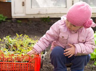 Litle Girl Showing Seedlings of  Pepper