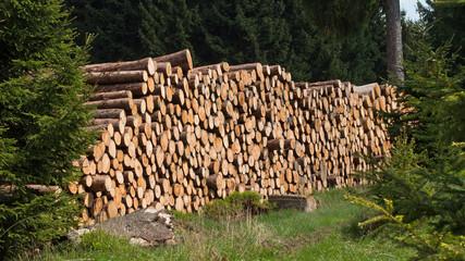 Forstwirtschaft im Mittelgebirge - Holzpolter im Harz