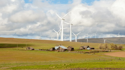 Wind Turbines with Cattle Grazing on Farmland Time Lapse