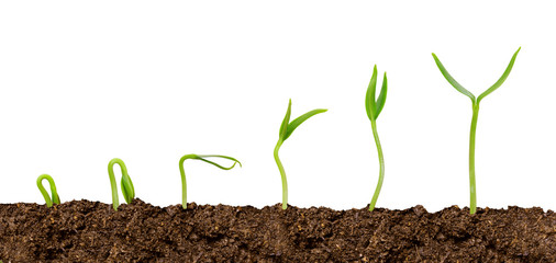 Plants growing from soil-Plant progress isolated