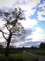 walking through killarney national park