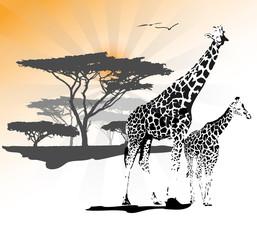 Two giraffe on savanna with tree and sun, vector illustration