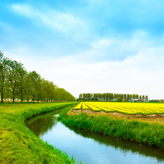 Tulip yellow blosssom flowers field in spring, canal and trees.