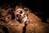 Lightpainted Skull