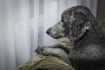 Keeping Watch - Watch Dog On Duty
