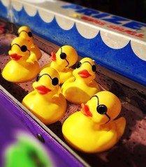 Carnival Game with Ducks
