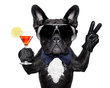canvas print picture - cocktail dog