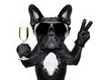 Leinwanddruck Bild - cocktail dog