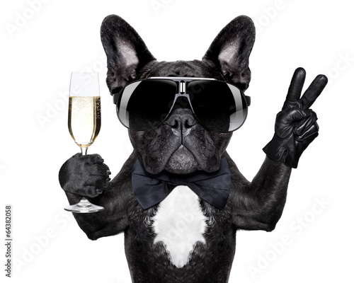 Leinwanddruck Bild cocktail dog