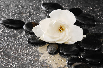 spa concept –gardenia flower