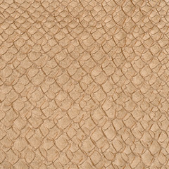 light brown reptile skin