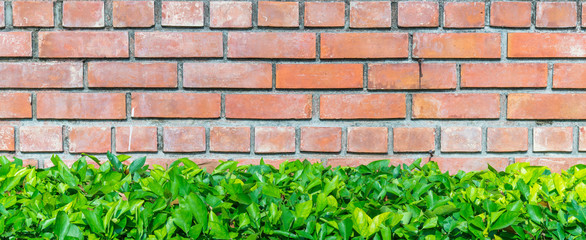 Red brick wall and green plant
