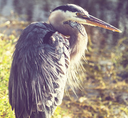Heron in Everglades