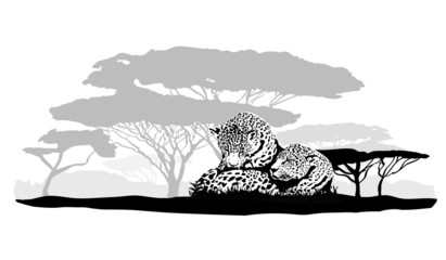Big cats jaguar, cheetah, leopard, vector illustration isolated