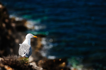 A seagull overlooking the cliffs