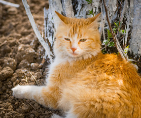 Stray cat resting near a tree. Selective focus.