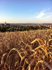 Kornfeld bei Bamberg