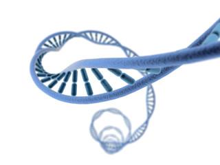 ADN sur fond blanc