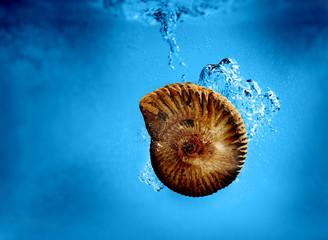 fossil underwater