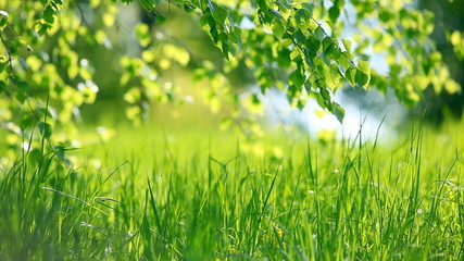 Summer park. Green grass, leaves and sunrays. Shot with motorize