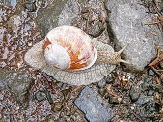 Animal Kingdom, snail on mountain road