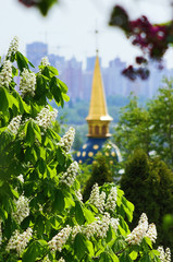 Blossoming chestnut near the Vydubychi monastery in Kiev