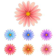 isolated flowers diferent colors. Vector illustrations