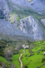 camino de montaña en los picos de europa