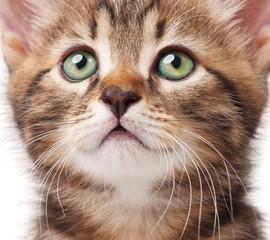Lovely kitten