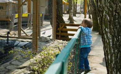 Маленький мальчик смотрит на животное  в зоопарке