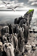 Buhnen am Ostseestrand