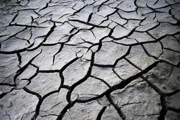 Desiccation cracks