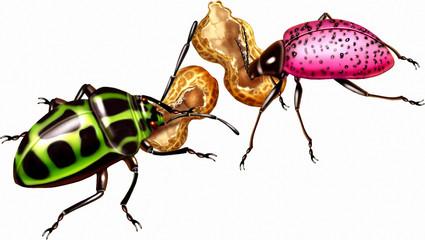 곤충 세밀화