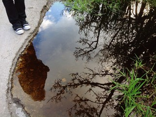 reflection in swampy puddle
