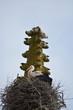 Obrazy na płótnie, fototapety, zdjęcia, fotoobrazy drukowane : Cigüeña en un nido de ramas
