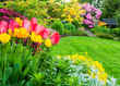 Tulpen im Frühlingsgarten