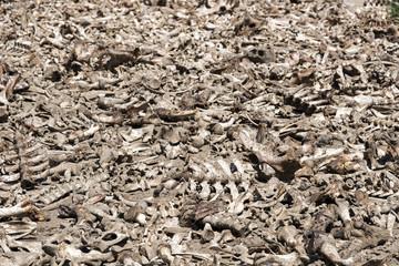 all dead animal bones