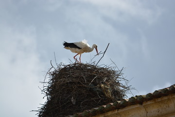 Cigüeña construyendo nido de ramas
