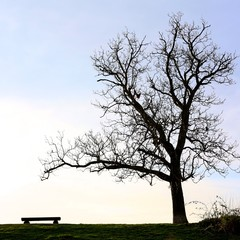 Tree and Bench Evening Silhouette