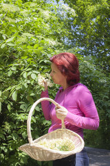 Mid aged woman picking elder blossoms