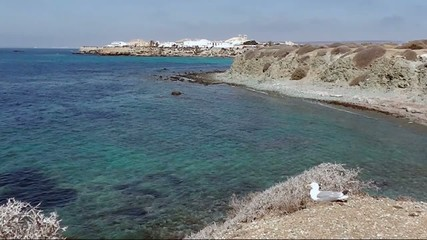 Tabarca island view and beautiful seagull