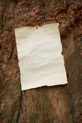 blank antique paper nailed to a tree
