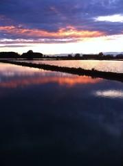Risaia al tramonto dopo un temporale
